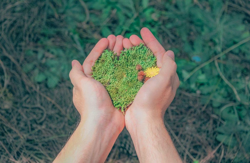 Mains formant un coeur avec des éléments naturelles, verdure, plantes forestières pour protéger l'environnement